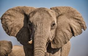 Photo of Elephant #7