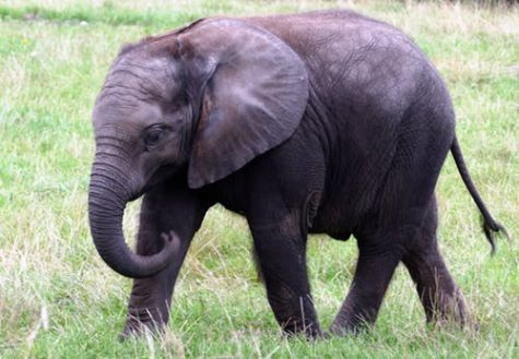 Photo of Elephant #15