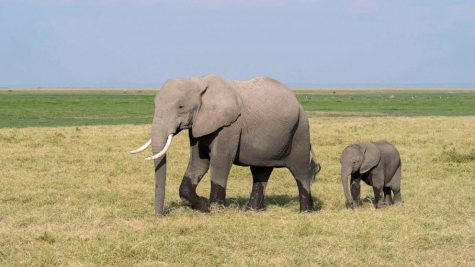 Photo of Elephant #11
