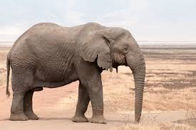 Photo of Elephant #8