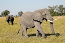 Photo of Elephant #6
