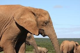 Photo of Elephant #2