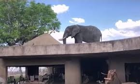Photo of Elephant #4