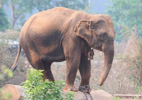 Photo of Elephant #14