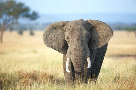 Photo of Elephant #12